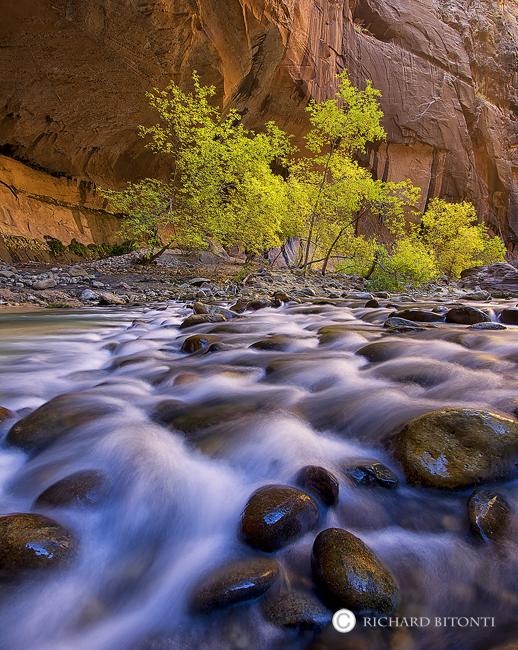 Virgin, River, Narrows, Fall, Color, Zion, National, Park, Utah, cottonwood, cascade, photo