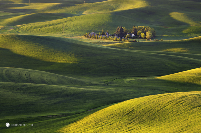 palouse, washington, wheat fields, colfax, pullman, sunrise, northwest, photo