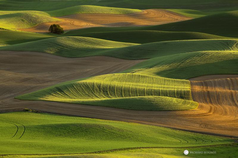 palouse washington steptoe butte state park wheat fields sunset, photo